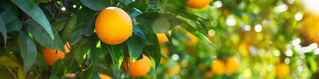 Få bedre resultater på Google når man leter etter vitamin C